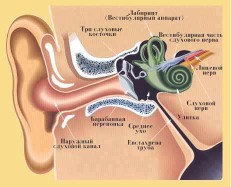 Звон и шум в ушах при остеохондрозе: причины и как лечить